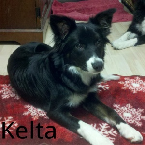 Meet Kelta, WHATADOG's new pack member