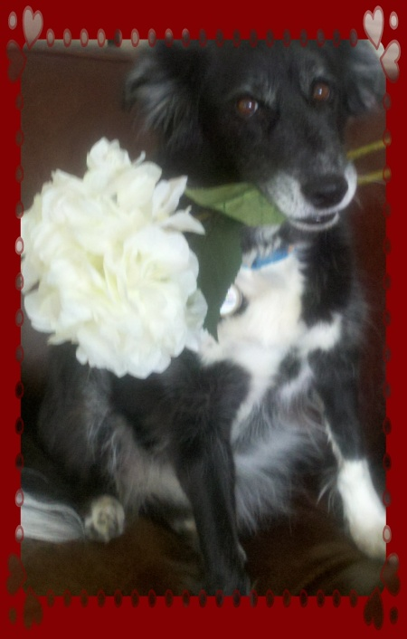 Flowers for Fido!  Make today sweet for a rescue dog!